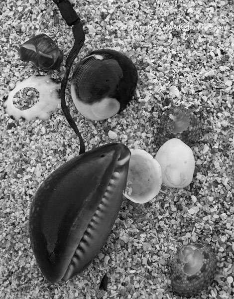 Introductory Darkroom View Camera Seashell details Cape Leeuwin Augusta Western Australia