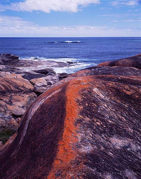 Orange Lichen Redgate Beach Margaret river region