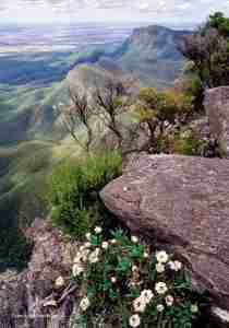 Skink Bluff Knoll Stirling Range