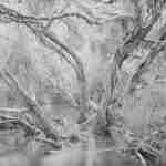 stand development paperbarks bannister creek landscape photographer